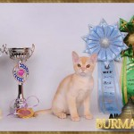 1333746743_all4cat_smolensk_winner_12_7358.jpg