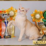 1336303043_all4cat_vladimir_winner_4_4186.jpg